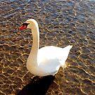 Swan in diamond water by Arie Koene