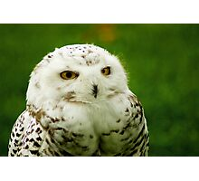 Snowy Owl - a penny for your thoughts Photographic Print