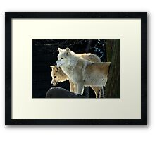 Two young wolves  Framed Print