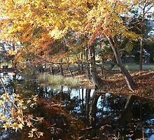 Fall Leaves Over the Pond by RocketmanTees