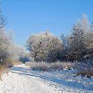 Winter in the Netherlands by Arie Koene