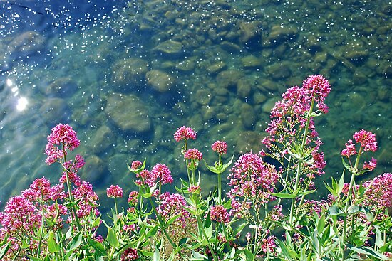 Flowers above the river by Arie Koene