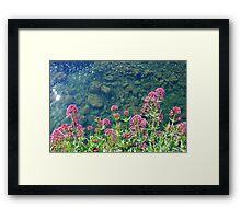 Flowers above the river Framed Print