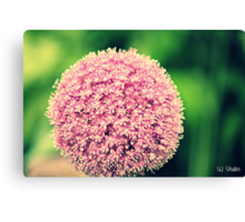Flower D: Canvas Print