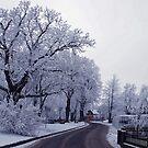 The beautiful side of winter by Arie Koene