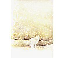 Arctic Fox in the Snow Photographic Print