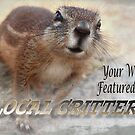 Banner – Local Critters by tinypaws