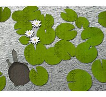 Water lilies with Florida Soft-shell Turtle Photographic Print