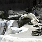 Polarlaxing by FoodMaster