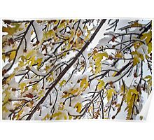 Colorful Maple Tree Branches In The Snow 3 Poster
