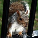 The Gate Squirrel by FoodMaster