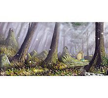 Totoro's Forest Photographic Print