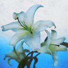 Winter flower from heavens by kindangel