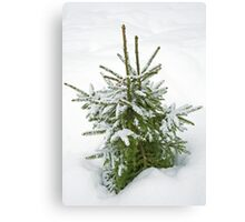 Snow on tree Canvas Print