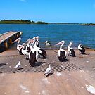 The Pelicans Yamba NSW Australia by Margaret Morgan (Watkins)