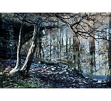 Pond in Winter  Photographic Print