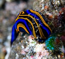 Nudibranch in Pearls by Mark Rosenstein