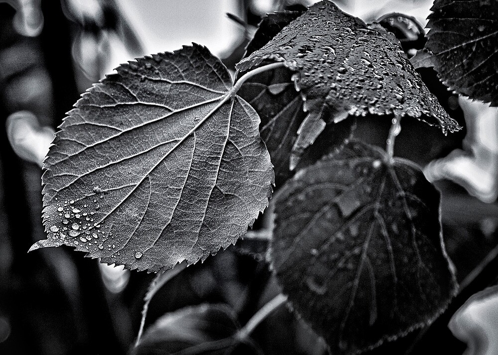 Raindrops After The Storm by Brian Carson