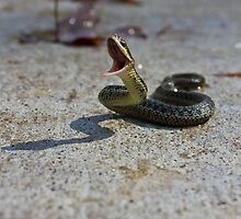Snake Attack by chelseysue
