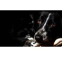 Harry Dog Photographic Print