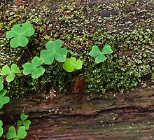 Lichen and Clovers by Brandt Campbell