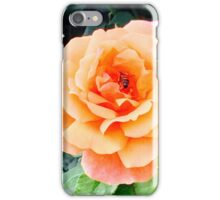 Rose with a bee iPhone Case/Skin