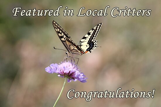 Local Critters Feature Banner Swallowtail by hummingbirds