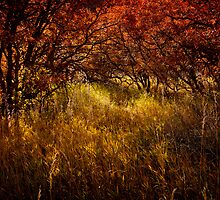 Autumn Reverie by Brandt Campbell