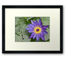waterlily Framed Print
