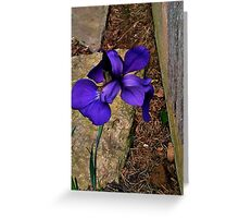 Vibrant flower Greeting Card