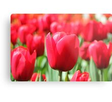 Not just roses are red. Metal Print