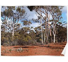 Nullarbor Trees  Poster