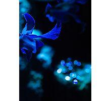 Midnight, Moonlight, Masquerede Photographic Print