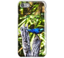 Colorful Bird iPhone Case/Skin