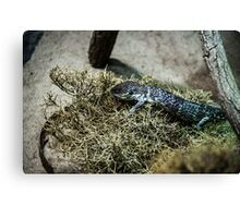 Sweet resting reptile Canvas Print