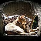 Sunbathing by Christina Backus