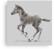 Drawing portrait of running foal Canvas Print