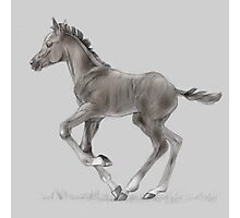 Drawing portrait of running foal Photographic Print