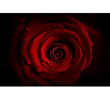 Shadowed Rose Photographic Print