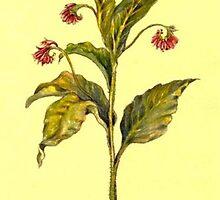 Vintage Herbs: Symphitum Officinale by HerbalGarden