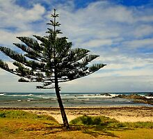 Revelling in the sea air,  The Norfolk Island Pine by myraj