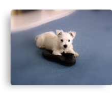 Buddie and the Slipper Canvas Print