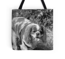 KING CHARLES SPANIEL Tote Bag
