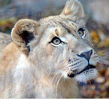 Lion Cub in Awe by sketchpoet