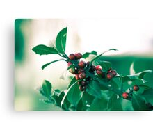 Holly bush with red berries Canvas Print