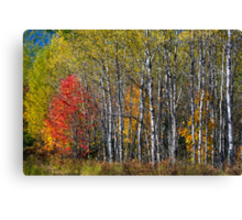 North Woods Autumn Canvas Print