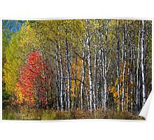 North Woods Autumn Poster