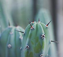 Cacti by Aaron  Wahab