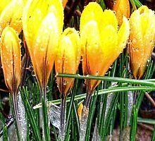 Shining In The Rain............. by lynn carter