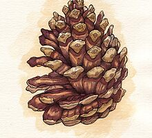 Pinecone by Carl Conway